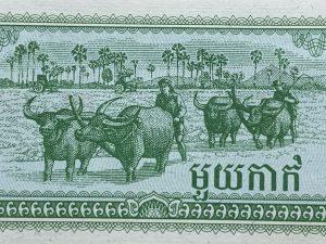 tiền hình con trâu của Campuachia